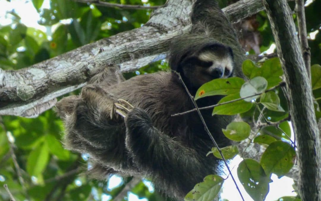 Costa Rica, Part I: Cahuita, Playa Blanca, and Sloth Sanctuary
